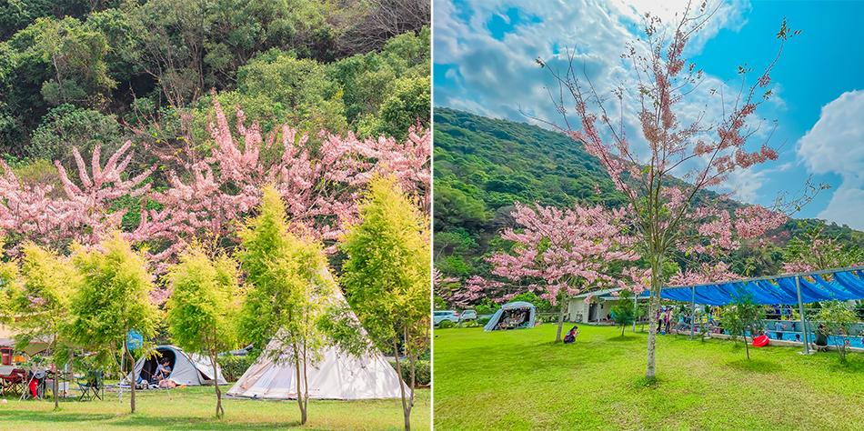 嚮露靈象山六龜露營區 x 高雄最美露營區 - 醒來就能看到粉紅花陣雨 | 超大草坪 | 戲水區 | 白沙區 |